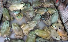 Anyone for Frog Porridge?