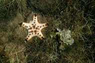 Some Kind of Star Fish