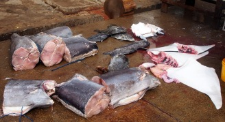 Sad to see shark fins